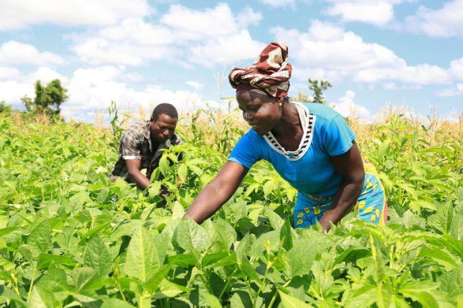 humana-dia-africa-agricultura-sostenible-ecologica-cooperacion.jpg