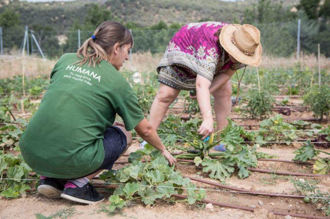 3C_Guadalix_humana_farmers_club.jpg